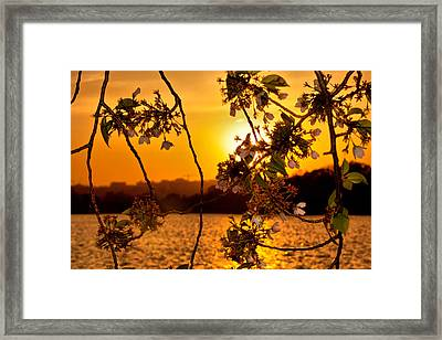 Framed Print featuring the photograph Cherry Blossom Sunset by Mitchell R Grosky