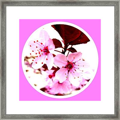 Cherry Blossom Framed Print by The Creative Minds Art and Photography