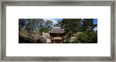 Cherry Blossom Trees In A Garden Framed Print by Panoramic Images