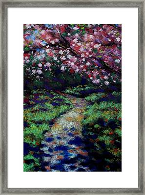 Cherry Blossom Walk  Framed Print by John  Nolan