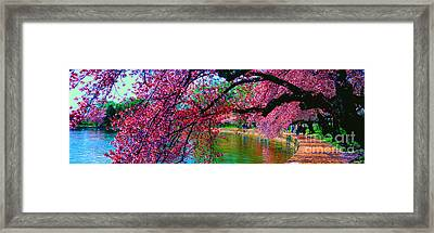 Cherry Blossom Walk Tidal Basin At 17th Street Framed Print