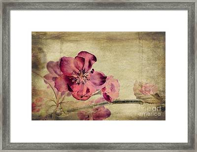 Cherry Blossom With Textures Framed Print by John Edwards
