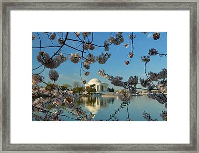 Cherry Blossoms 2013 - 039 Framed Print by Metro DC Photography