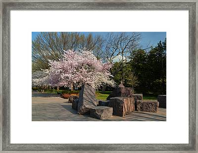Cherry Blossoms 2013 - 058 Framed Print by Metro DC Photography