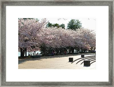 Cherry Blossoms 2013 - 059 Framed Print by Metro DC Photography