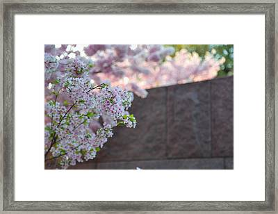 Cherry Blossoms 2013 - 066 Framed Print by Metro DC Photography