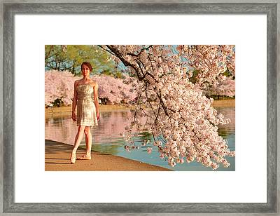 Cherry Blossoms 2013 - 080 Framed Print by Metro DC Photography