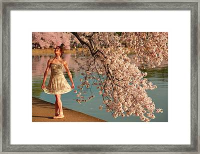 Cherry Blossoms 2013 - 082 Framed Print