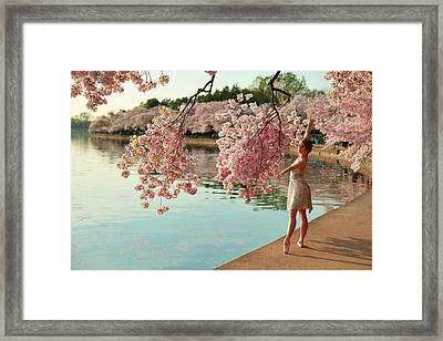 Cherry Blossoms 2013 - 085 Framed Print by Metro DC Photography