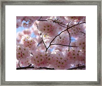 Cherry Blossoms And Blue Sky-1 Framed Print