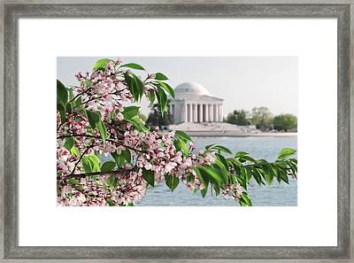 Framed Print featuring the photograph Cherry Blossoms And The Jefferson Memorial 2 by Mitchell R Grosky