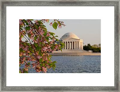 Framed Print featuring the photograph Cherry Blossoms And The Jefferson Memorial 3 by Mitchell R Grosky