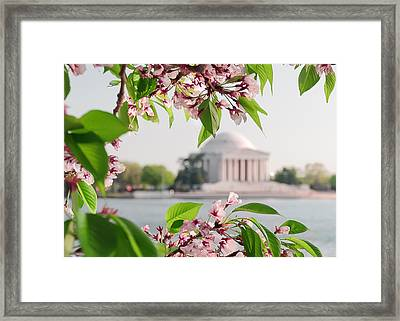 Framed Print featuring the photograph Cherry Blossoms And The Jefferson Memorial by Mitchell R Grosky