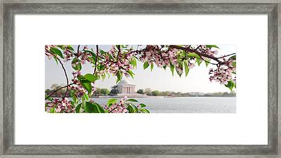 Framed Print featuring the photograph Cherry Blossoms And The Jefferson Memorial Panorama by Mitchell R Grosky