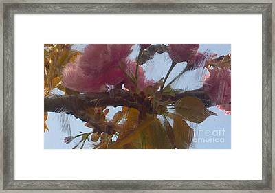 Cherry Blossoms By Van Gogh Framed Print by Genevieve Esson