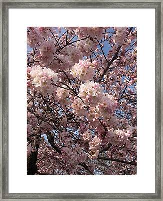 Cherry Blossoms For Lana Framed Print