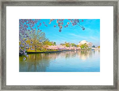 Cherry Blossoms From Shadow To Light Framed Print