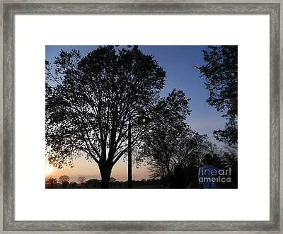 Framed Print featuring the photograph Cherry Blossoms In The Night by Emmy Marie Vickers