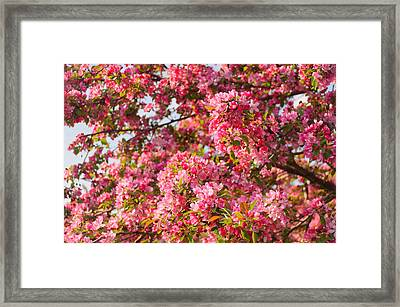 Framed Print featuring the photograph Cherry Blossoms In Washington D.c. by Mitchell R Grosky