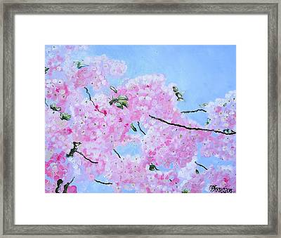 Cherry Blossoms Framed Print by Melissa Torres