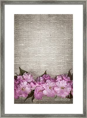 Cherry Blossoms On Linen  Framed Print by Elena Elisseeva