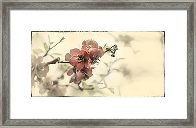 Framed Print featuring the photograph Cherry Blossoms by Peter v Quenter