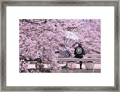 Cherry Blossoms Road Framed Print by Jinjer Templer