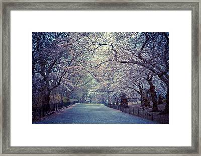 Cherry Blossoms - Spring - Central Park Framed Print by Vivienne Gucwa