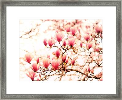 Cherry Blossoms - Springtime Blush Pink Framed Print by Vivienne Gucwa
