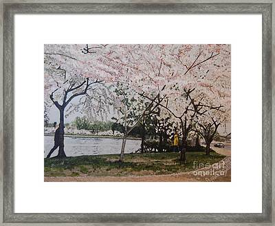 Cherry Blossoms Framed Print by Terry Stephen