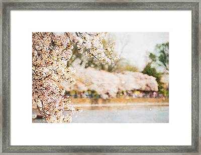 Framed Print featuring the photograph Cherry Blossoms In Washington Dc by Vizual Studio