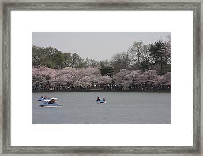 Cherry Blossoms - Washington Dc - 011310 Framed Print by DC Photographer