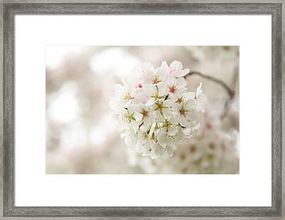 Cherry Blossoms - Washington Dc - 0113101 Framed Print by DC Photographer