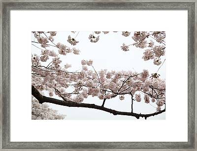 Cherry Blossoms - Washington Dc - 0113103 Framed Print