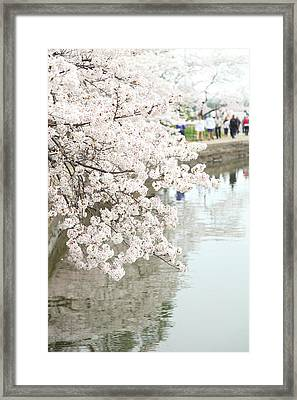 Cherry Blossoms - Washington Dc - 0113104 Framed Print by DC Photographer