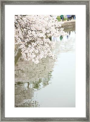 Cherry Blossoms - Washington Dc - 0113105 Framed Print by DC Photographer