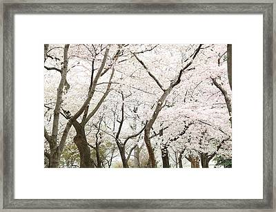 Cherry Blossoms - Washington Dc - 0113111 Framed Print by DC Photographer