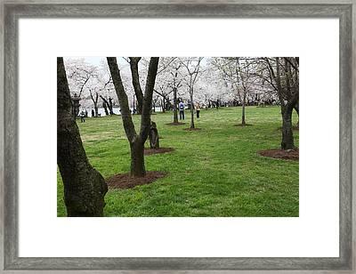Cherry Blossoms - Washington Dc - 0113128 Framed Print