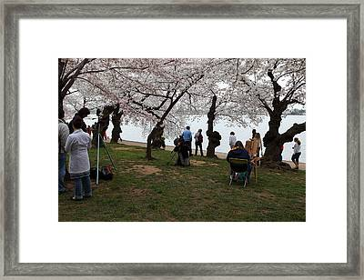 Cherry Blossoms - Washington Dc - 0113132 Framed Print by DC Photographer