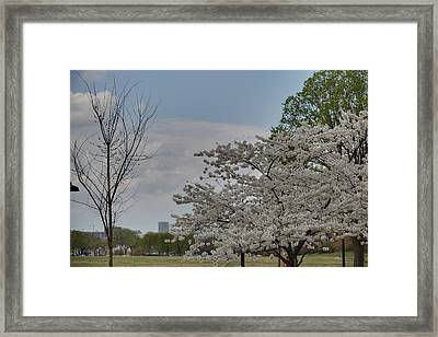 Cherry Blossoms - Washington Dc - 011348 Framed Print by DC Photographer