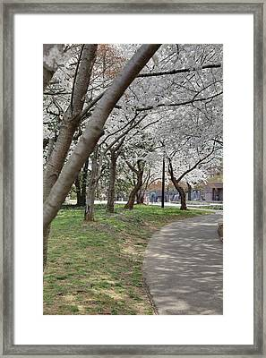 Cherry Blossoms - Washington Dc - 011360 Framed Print by DC Photographer