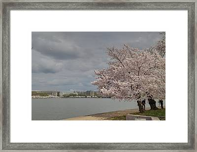 Cherry Blossoms - Washington Dc - 011362 Framed Print by DC Photographer