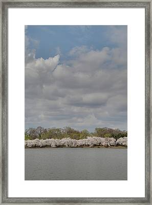 Cherry Blossoms - Washington Dc - 011368 Framed Print by DC Photographer