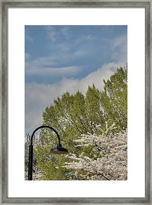 Cherry Blossoms - Washington Dc - 011386 Framed Print by DC Photographer