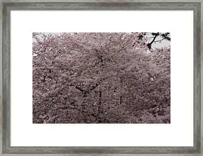 Cherry Blossoms - Washington Dc - 01139 Framed Print by DC Photographer