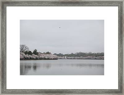 Cherry Blossoms - Washington Dc - 011397 Framed Print by DC Photographer