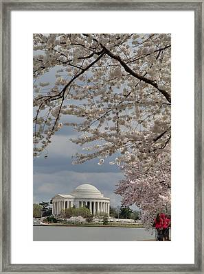 Cherry Blossoms With Jefferson Memorial - Washington Dc - 011314 Framed Print