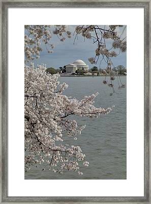 Cherry Blossoms With Jefferson Memorial - Washington Dc - 011321 Framed Print by DC Photographer
