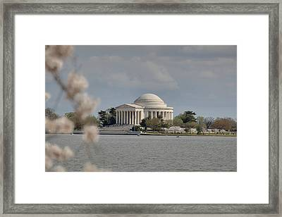 Cherry Blossoms With Jefferson Memorial - Washington Dc - 011328 Framed Print by DC Photographer