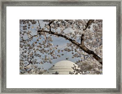 Cherry Blossoms With Jefferson Memorial - Washington Dc - 011331 Framed Print by DC Photographer